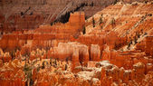 Bryce Canyon landscape — Stock Photo