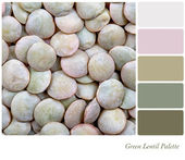 Green Lentil Palette — Stock Photo