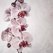 Pink orchid vintage — Stock Photo