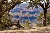 Grand Canyon through the trees — 图库照片