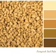 Fenugreek seed palette — Stock Photo #21585807