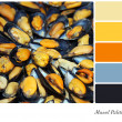 Mussel Palette — Stock Photo