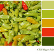 Chilli pepper palette — Stock Photo