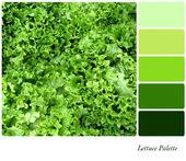 Lettuce Palette — Stock Photo