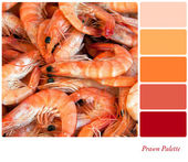 Prawn Palette — Stock Photo