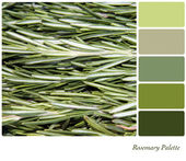 Rosemary Palette — Stock Photo