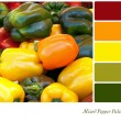 Mixed Pepper Palette — Stock Photo