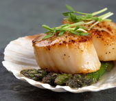 Seared scallops — Stock Photo