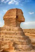 Sphinx profile — Stock Photo