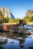 マーセド川の中の倒木 — ストック写真