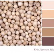 Stock Photo: White Peppercorn Palette