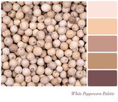 White Peppercorn Palette — Stock Photo