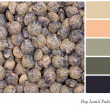 Puy Lentil Palette — Stock Photo