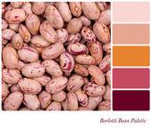 Borlotti Bean Palette — Stock Photo