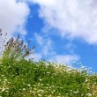Stock Photo: English summer meadow
