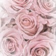 Stock Photo: Faded roses
