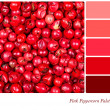 Colour palette template — Stock Photo