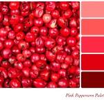Colour palette template — Stock Photo #28267399
