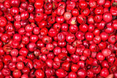 Pink peppercorn background — Stock Photo
