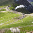 Sheep and mountain railway — Stock Photo