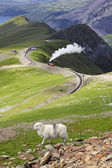 Sheep and mountain railway — Stock Photo