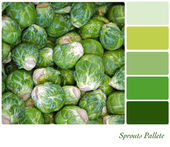 Sprouts palette — Stock Photo