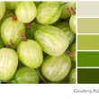 Gooseberry palette — Stock Photo