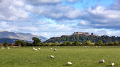 Sheep and Stirling Castle — Stock Photo