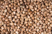 Hemp seed background — Stockfoto