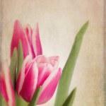 Tulips vintage — Stock Photo #40084533