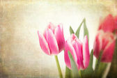 Tulips vintage — Stock Photo