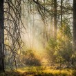 Deep in the forest — Stock Photo
