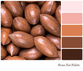 Pecan nut palette — Stock Photo
