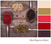 Mixed peppercorns Palette — Stock Photo