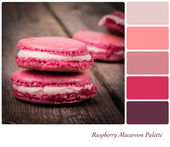 Raspberry Macaroon Palette — Stock Photo