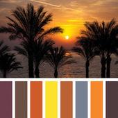 Sunrise Palette — Stock Photo
