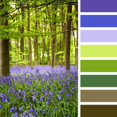 Bluebells palette — Stock Photo