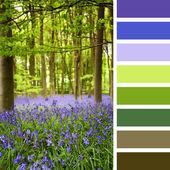 Bluebells palette — Stock Photo