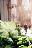 Flowers for sale — Stock Photo