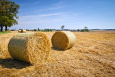 Hay bales on the field after harvest — Stock Photo