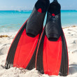 Stock Photo: Red flippers at CaribbeSea