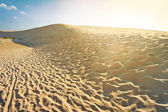 Shifting dunes at sunset — Stock Photo