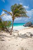 Palm tree on the idyllic beach of Tulum — Stock Photo