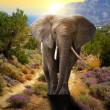 Elephant walking on the road — Stock Photo #13547501