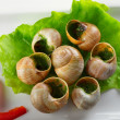 French snails in garlic butter — Stock Photo