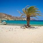 Cretan Date palm tree on idyllic Vai Beach — Stock Photo #13551833