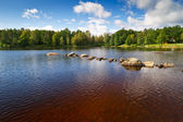 Brown water lake in Sweden — Stock Photo
