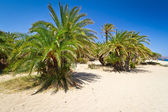 Cretan Date palm trees on idyllic Vai Beach — Stock Photo