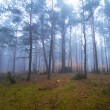 Misty forest in foggy weather — Stock Photo