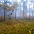 Misty forest in foggy weather — Foto Stock